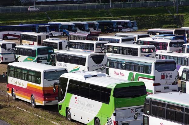 観光バスが50台ほど2