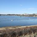 Photos: 千波湖氷結