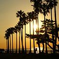 写真: 夕陽をバックにパームツリー!(111126)