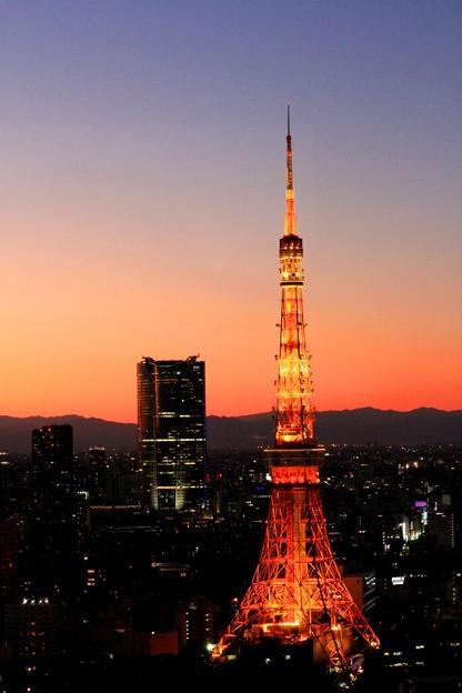 東京タワー (12)