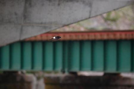 桜と鉄道とイワツバメ2