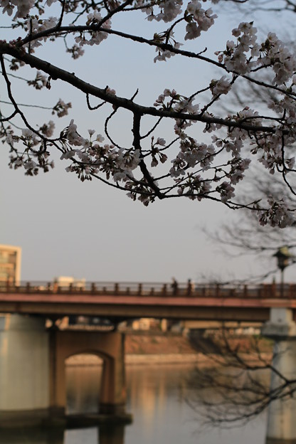 Photos: 後楽園の鶴見橋