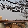 後楽園の鶴見橋