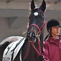 Photos: Yukino Ressha