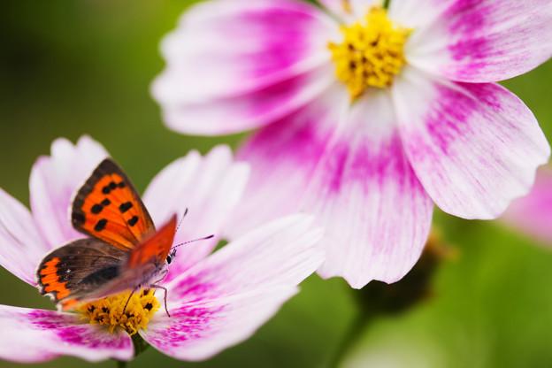 蝶の休む場所