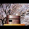 燗銅壺と花見 瑞鶴
