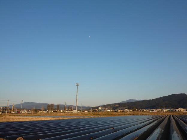 夕方の月と黒い畝
