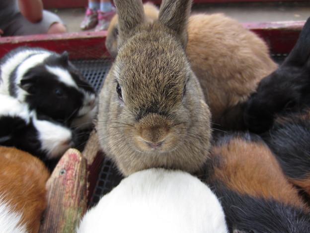 ウサギ (3)