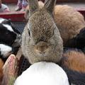 Photos: ウサギ (3)