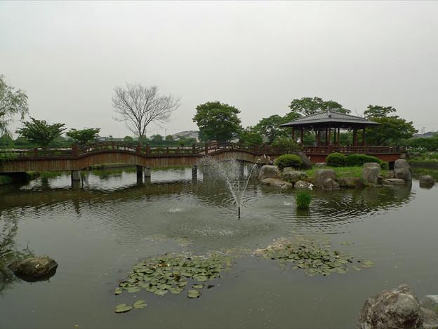 大和花しょうぶ園(4)