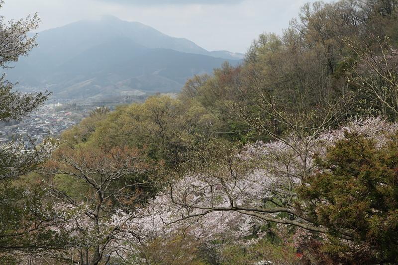 IMG_5956弘法山登山