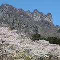 Photos: IMG_6055妙義山_艶桜_さくらの里