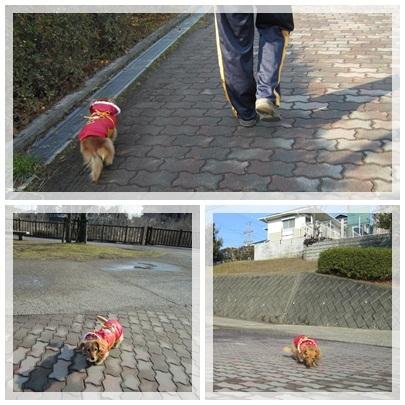 20120122 お散歩1