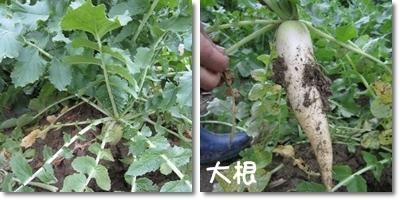20110611 野菜2