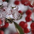 南天と氷のオブジェ (*^ー゚)b