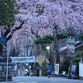 Photos: 桜巡礼`12'(身延、久遠寺、桜と人編)-3