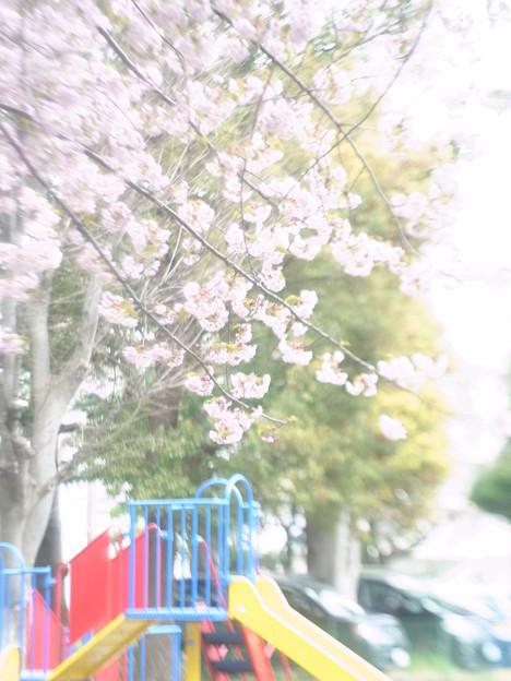 桜_jupiter_04