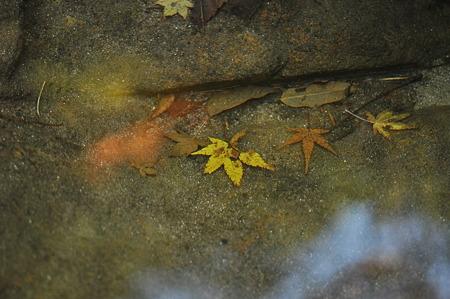 赤目四十八滝の紅葉・7