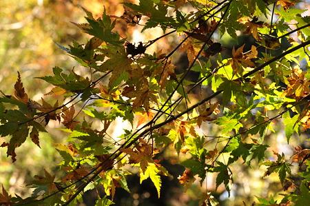 赤目四十八滝の紅葉・8