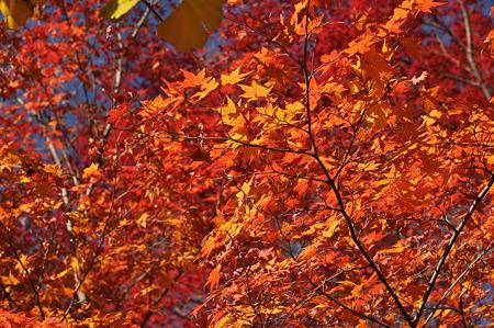 亀山公園の紅葉・14