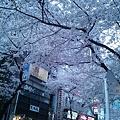 Photos: 2012-渋谷の桜