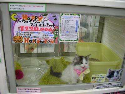 写真: 公園のネコだ!