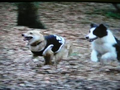 看板犬と爆走