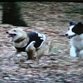 写真: 看板犬と爆走