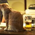 Photos: 猫とビール