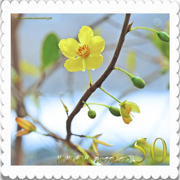 <花切手*ミッキーマウスの木*続々開花>