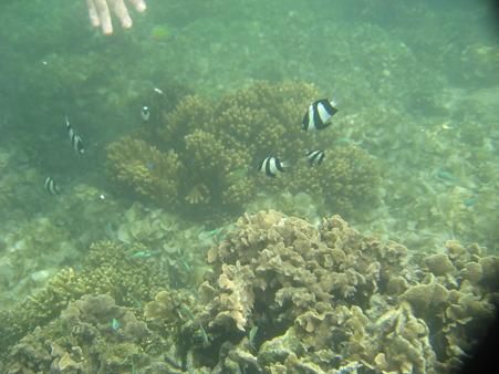 アルパット島近くで熱帯魚その18