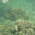 写真: アルパット島近くで熱帯魚その18