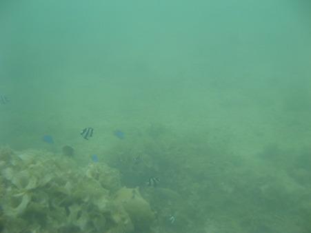 相方撮影の熱帯魚06