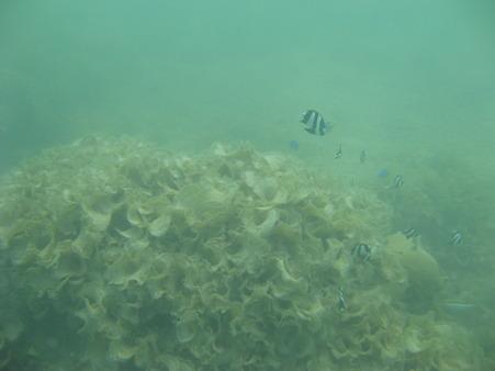 相方撮影の熱帯魚08