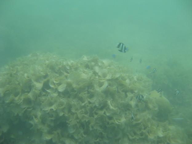 写真: 相方撮影の熱帯魚08
