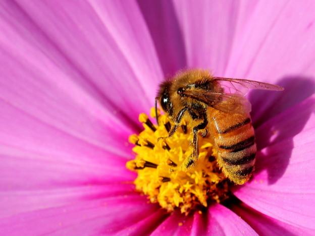 一生懸命なハチさん