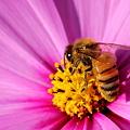Photos: 一生懸命なハチさん